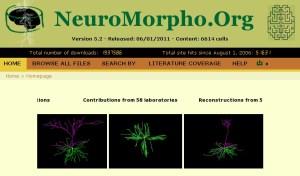 Neuromorpho