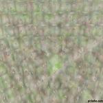 cubo Reflejado