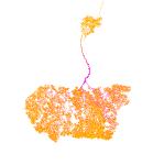 neurona del lóbulo visual de un moscardón