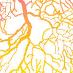 neurona_thumb