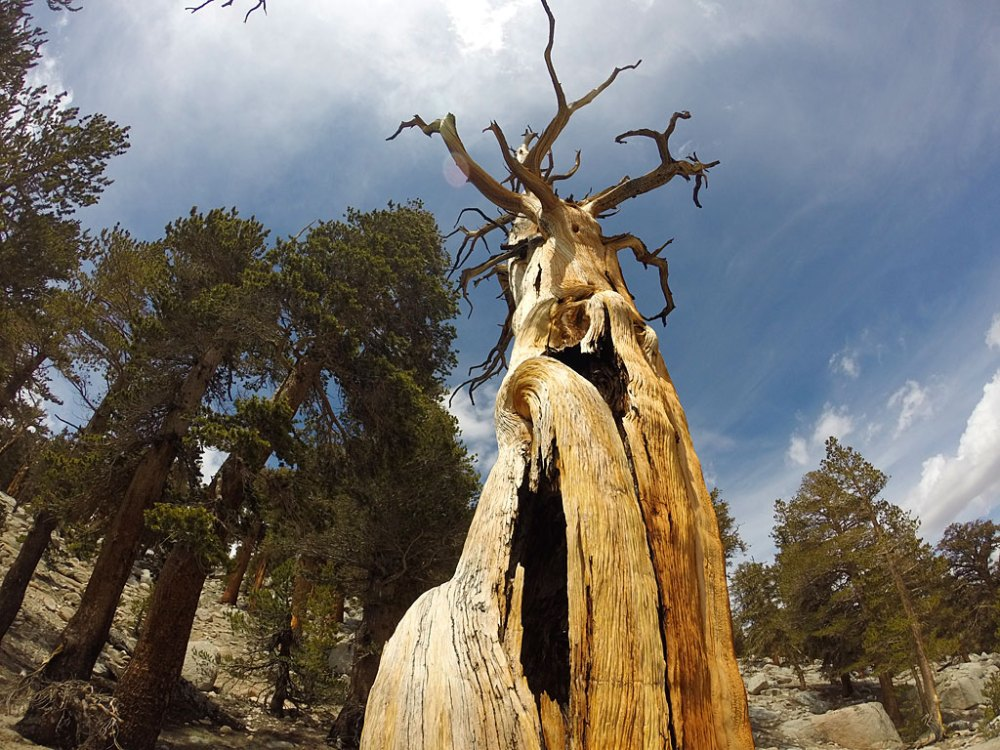 We got to see some very cool weathered trees along the trail.