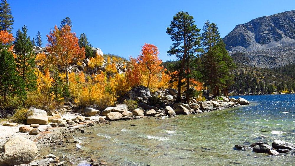 Autumn aspen colors at Rock Creek Lake.