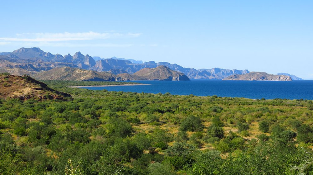 Looking north of Estero San Cosme along the Sea of Cortez. Taken from right about here.