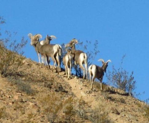 Mojave Road + Wandering