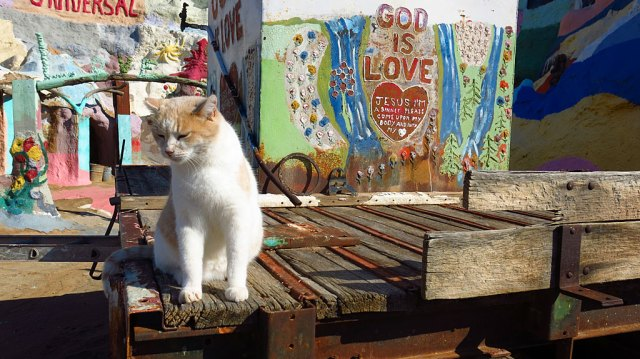 God is love; cats love God, therefore cats are God.