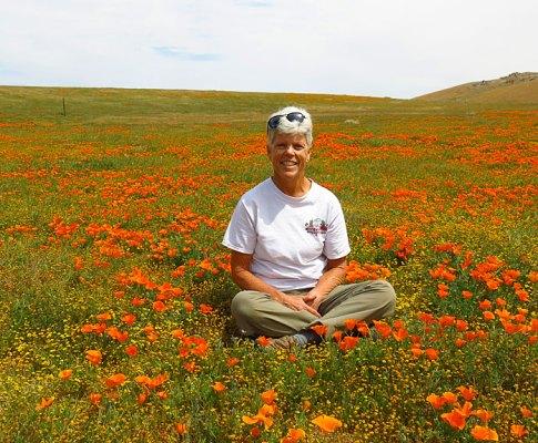 High Desert Wildflowers