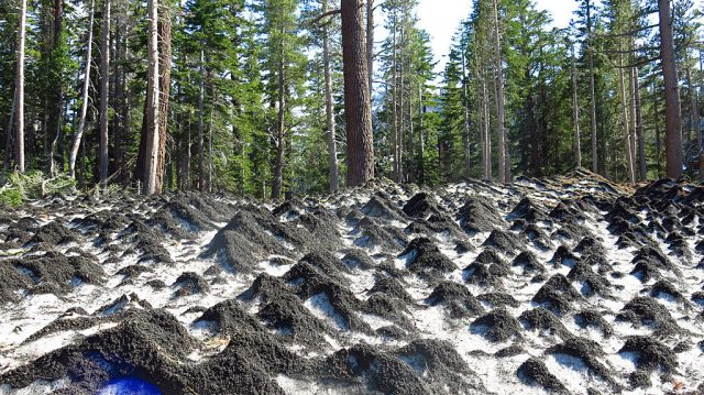Suncups near the base of Mammoth Mountain Resort topped with road cinders. Suncups form during the ablation of snowy surfaces.