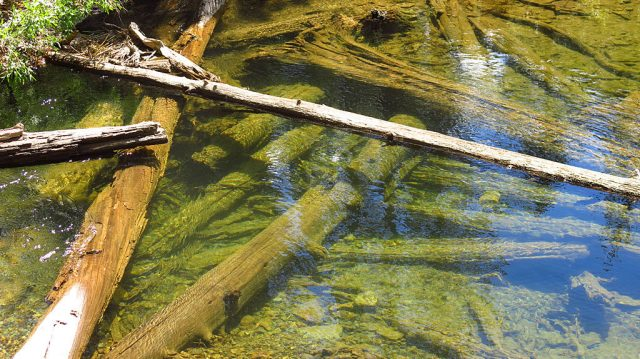 Lots of clear water flowing into Virginia Lakes -- let's celebrate by turning on our garden hoses!