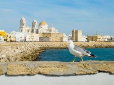 A gull walking in Paseo Campo del Sur (Cadiz Cathedral called La Catedral Vieja de Cadiz or Iglesia de Santa Cruz). Cadiz. Andalusia, Spain