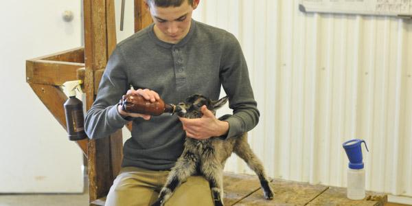 baby goats java and jericho_blog_10