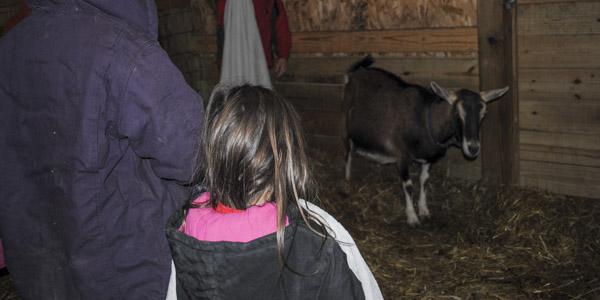 baby-goat-patriot_blog_1