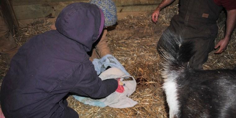 goat birth payton_1