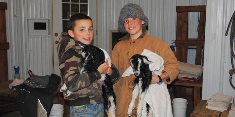 goat birth payton_3