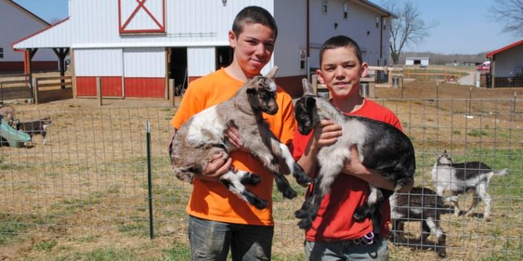 zany baby goats_blog_9