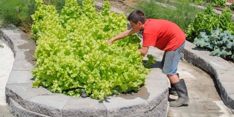 emery gardening_blog