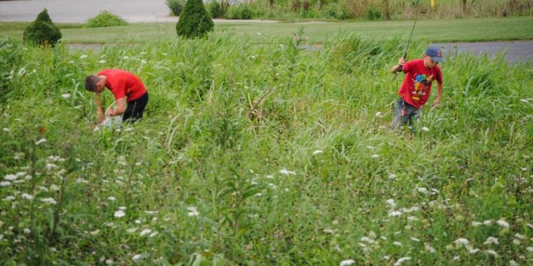 emery and greyden removing johnson grass_blog