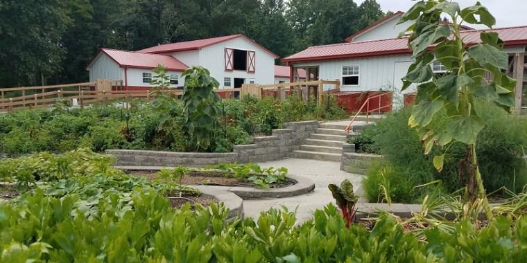 Organic Gardening at Goat Milk Stuff