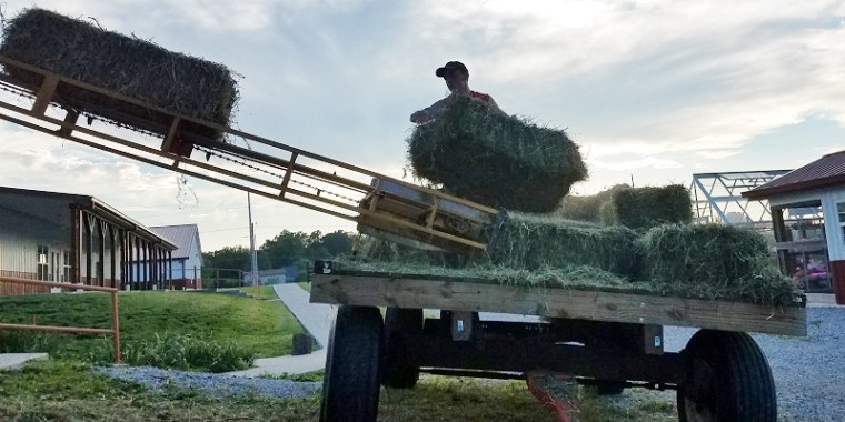 Putting Up Hay