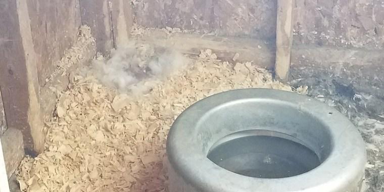 Nest for Baby Bunnies