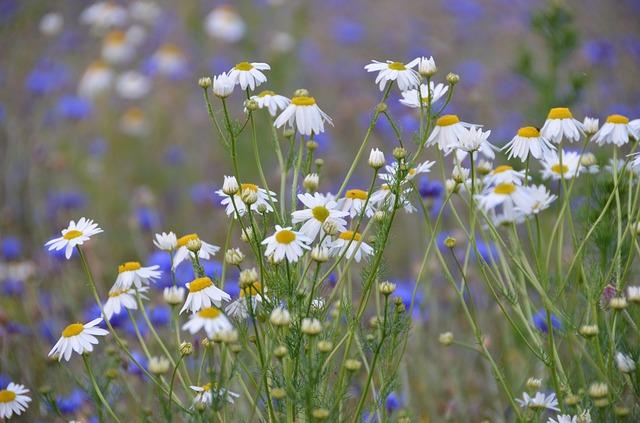 flower-meadow-280384_640