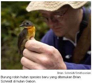 Burung Yang Dimaksud