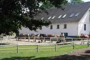 Gesattelte Pferde beim Reitausflug in Zislow