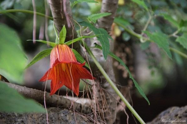 Teneryfa raj dla miłośników roślin (20)
