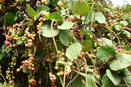 Teneryfa raj dla miłośników roślin (37)