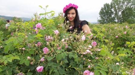 Festiwal Róż w Bułgarii