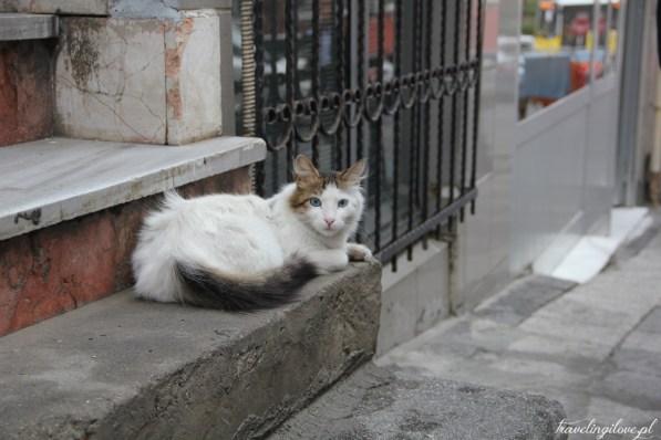 Stambuł - miasto kotów
