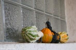 Dynie ozdobne na balkonie (2)