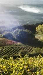 Zen en wijn Martin Kieninger omgeving en huis