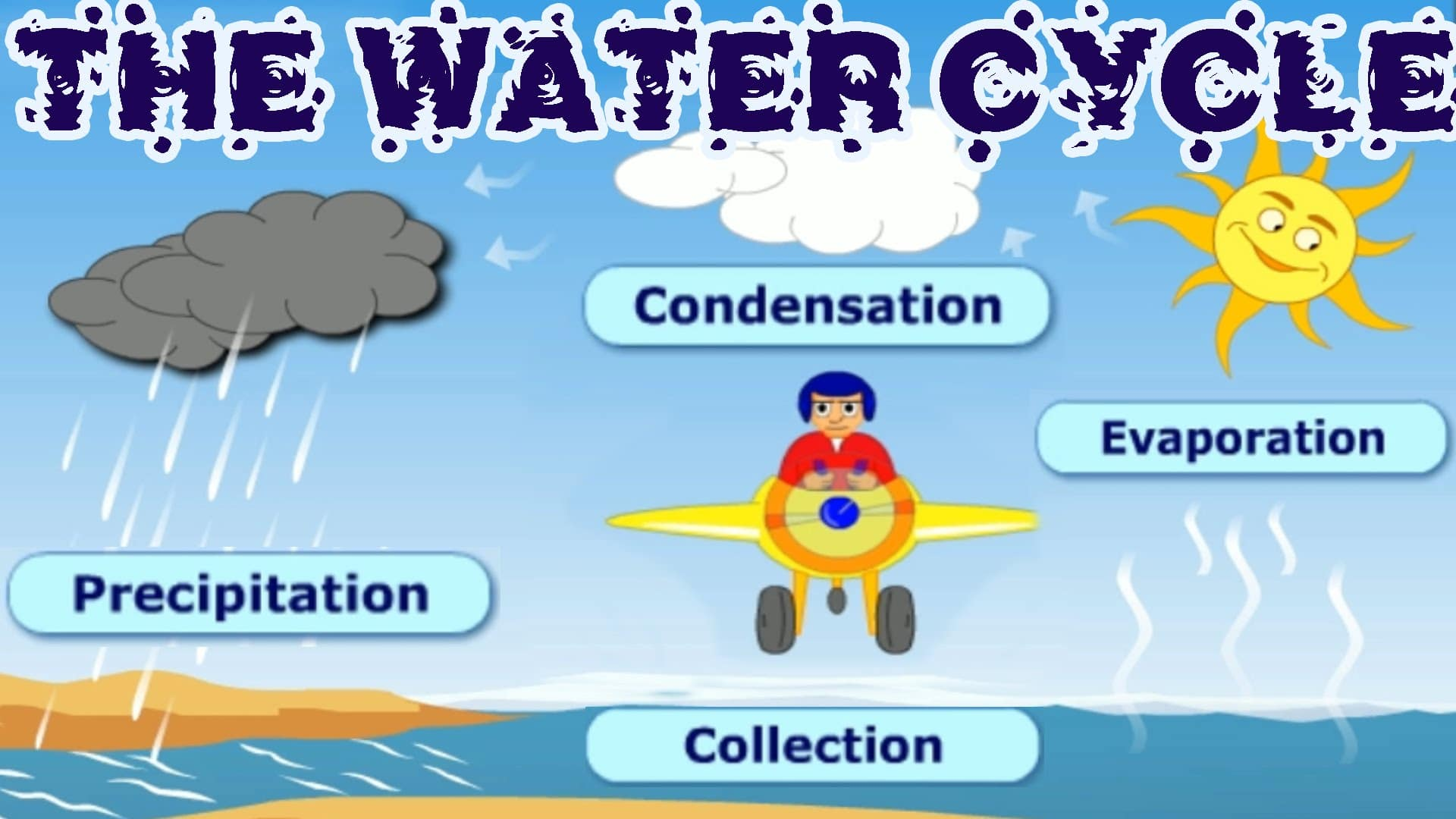 The Water Cycle Collection Condensation Precipitation