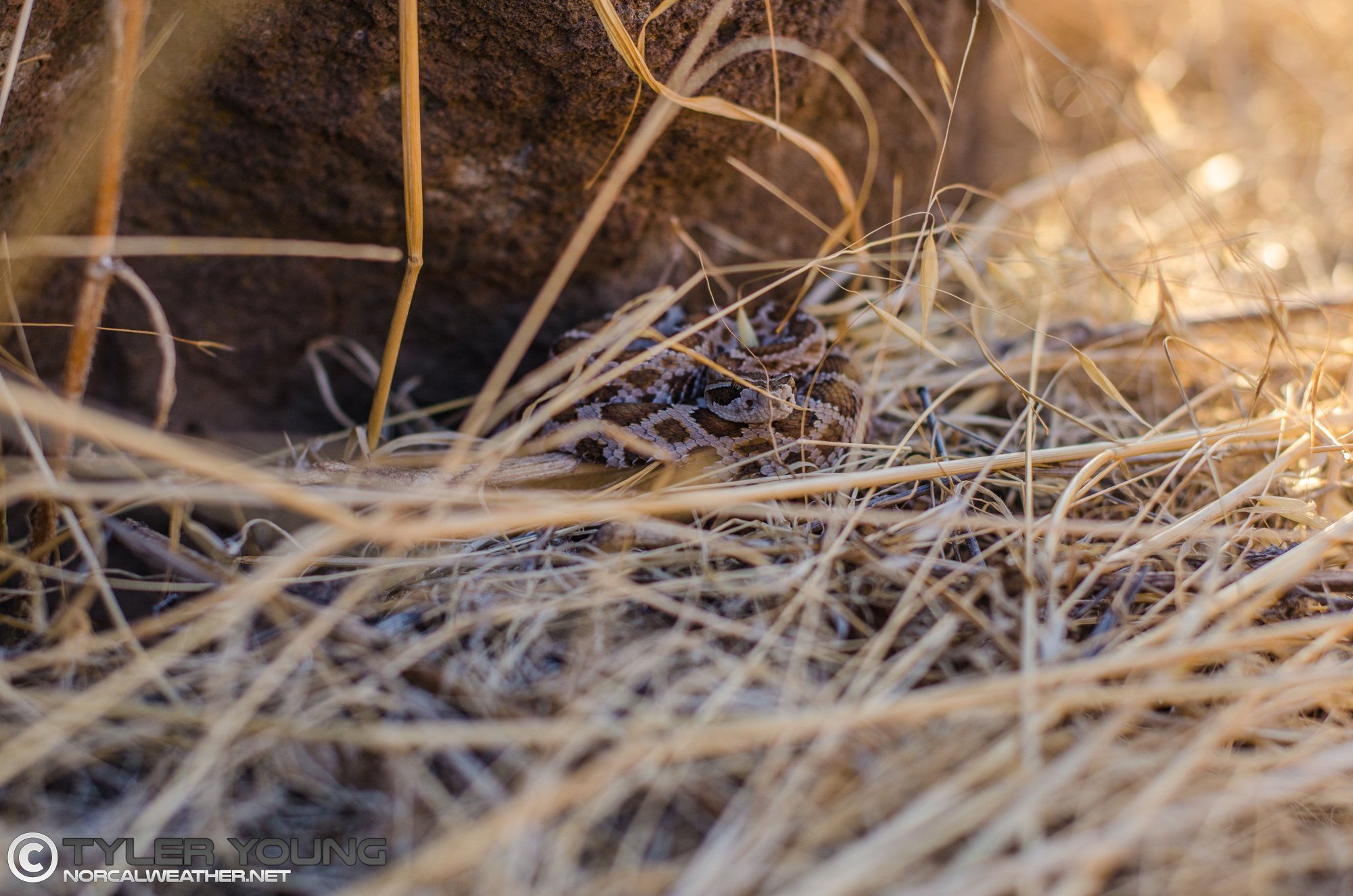 Snake Season to Remain Active Through at Least Mid-October