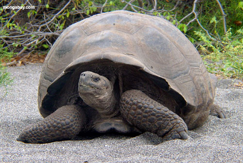 galapagos islands geography case study