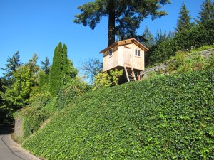 Hill, treehouse, tall tree--must be Portland's West Hills