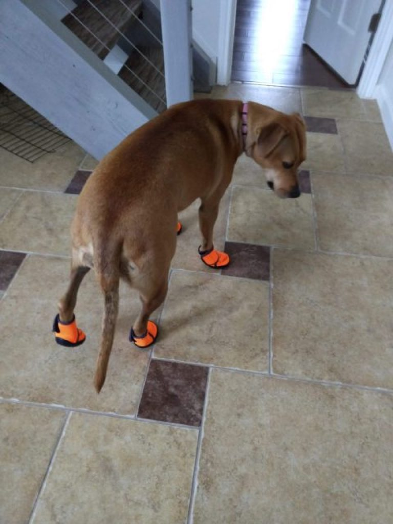 Abbey appearing to look humiliated in her boots.