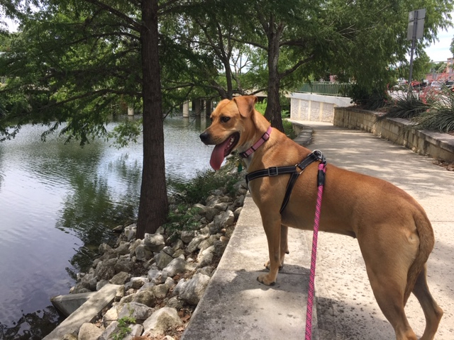 This is one dog friendly riverwalk in Boerne, Texas.