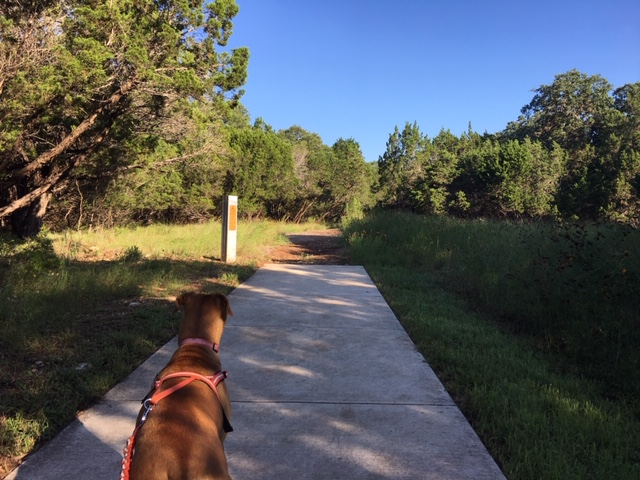 The Gold Canyon Park loop trail suddenly transitions from concrete to mulch.