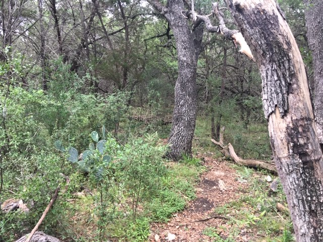 There are open areas and there are wooded areas such as this.