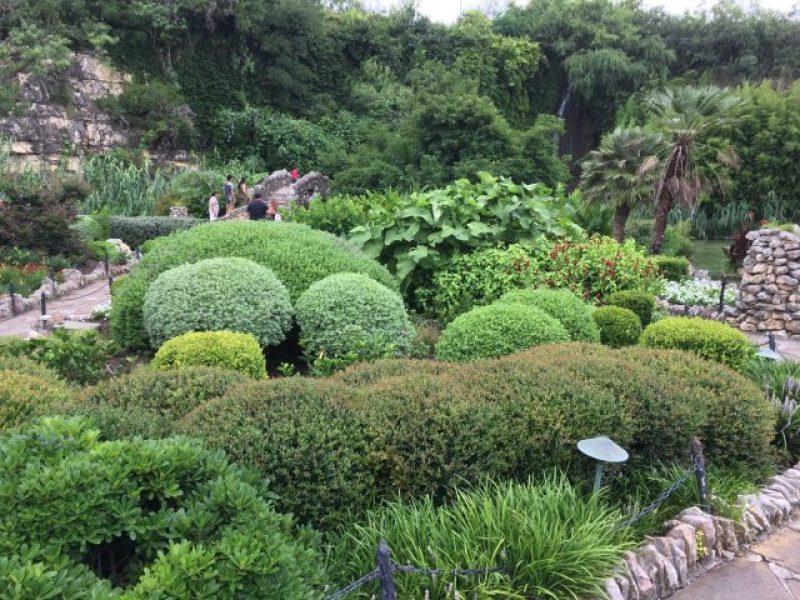 Various plant life at the Japanese Tea Garden in San Antonio.