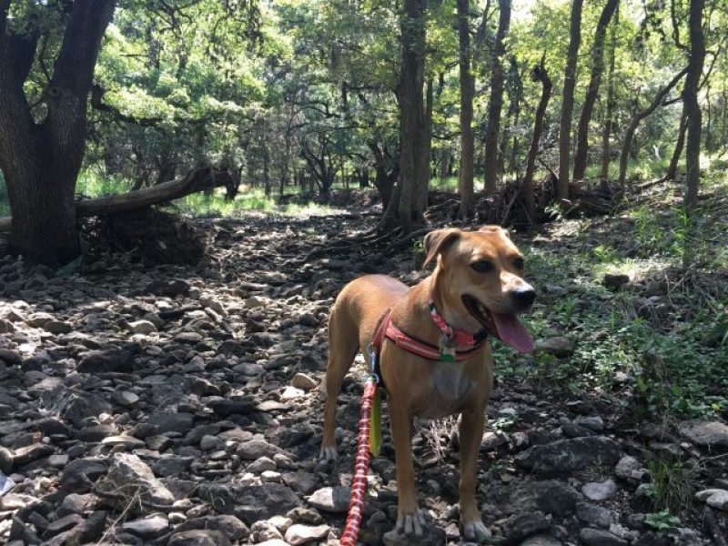 Go off trail at the enormous dog friendly McAllister Park.