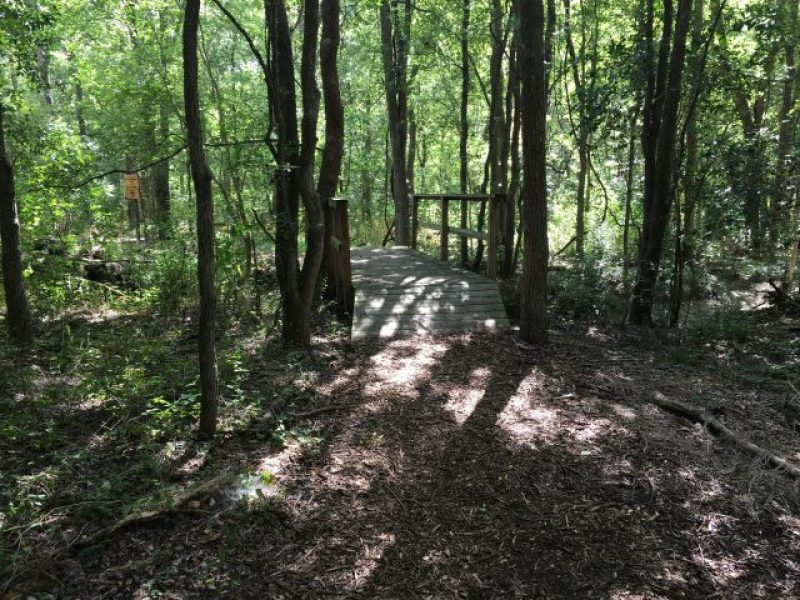 A bridge on the spooky trail at Headwaters Sanctuary.