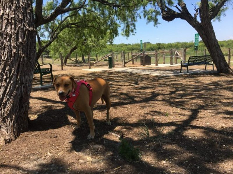 South Side Lions Dog Park appears muddy and empty.