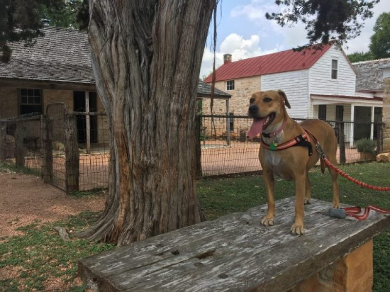 The Living History Farm at LBJ State Park