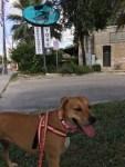5 Points Local - a Gluten Free, Dog Friendly Restaurant