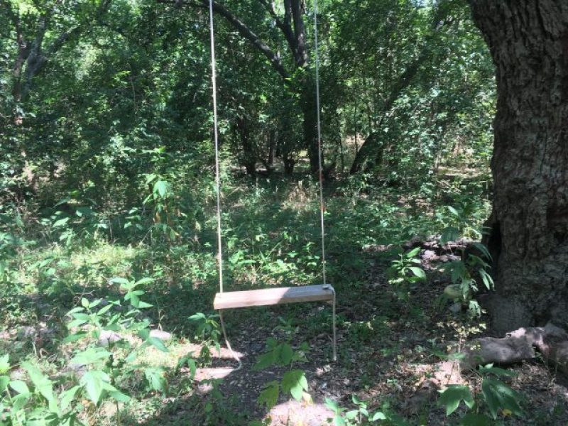 A tree swing in the woods.