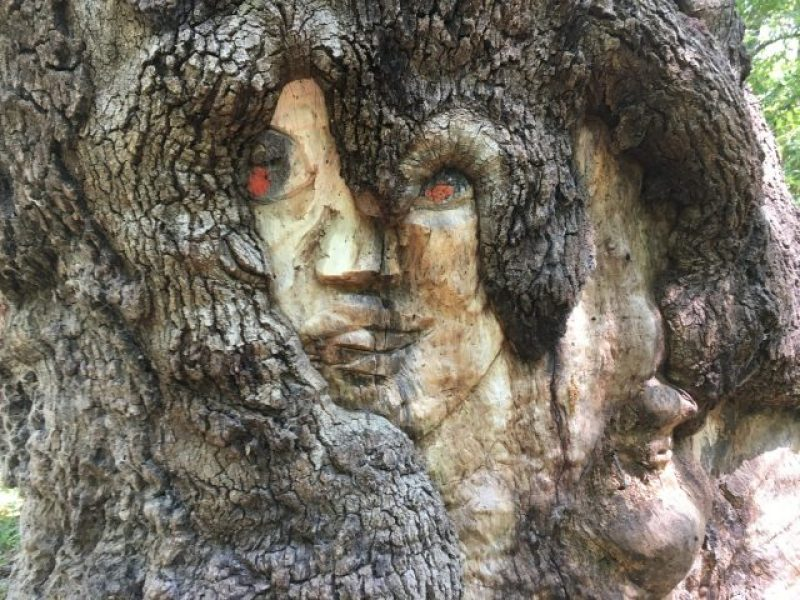 An interesting carving of a face in a tree inside John James Park.