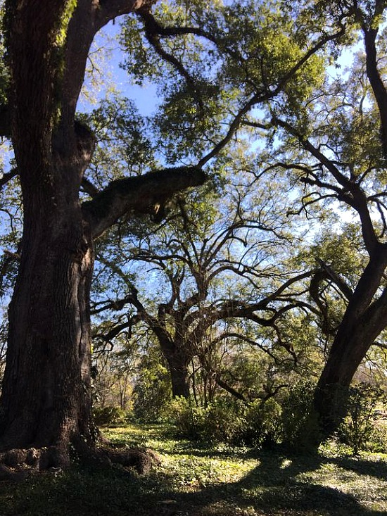 Twin-Oaks-Natchez-grounds