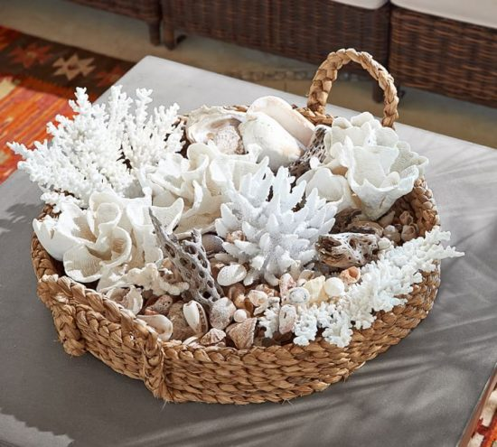 white-spike-coral